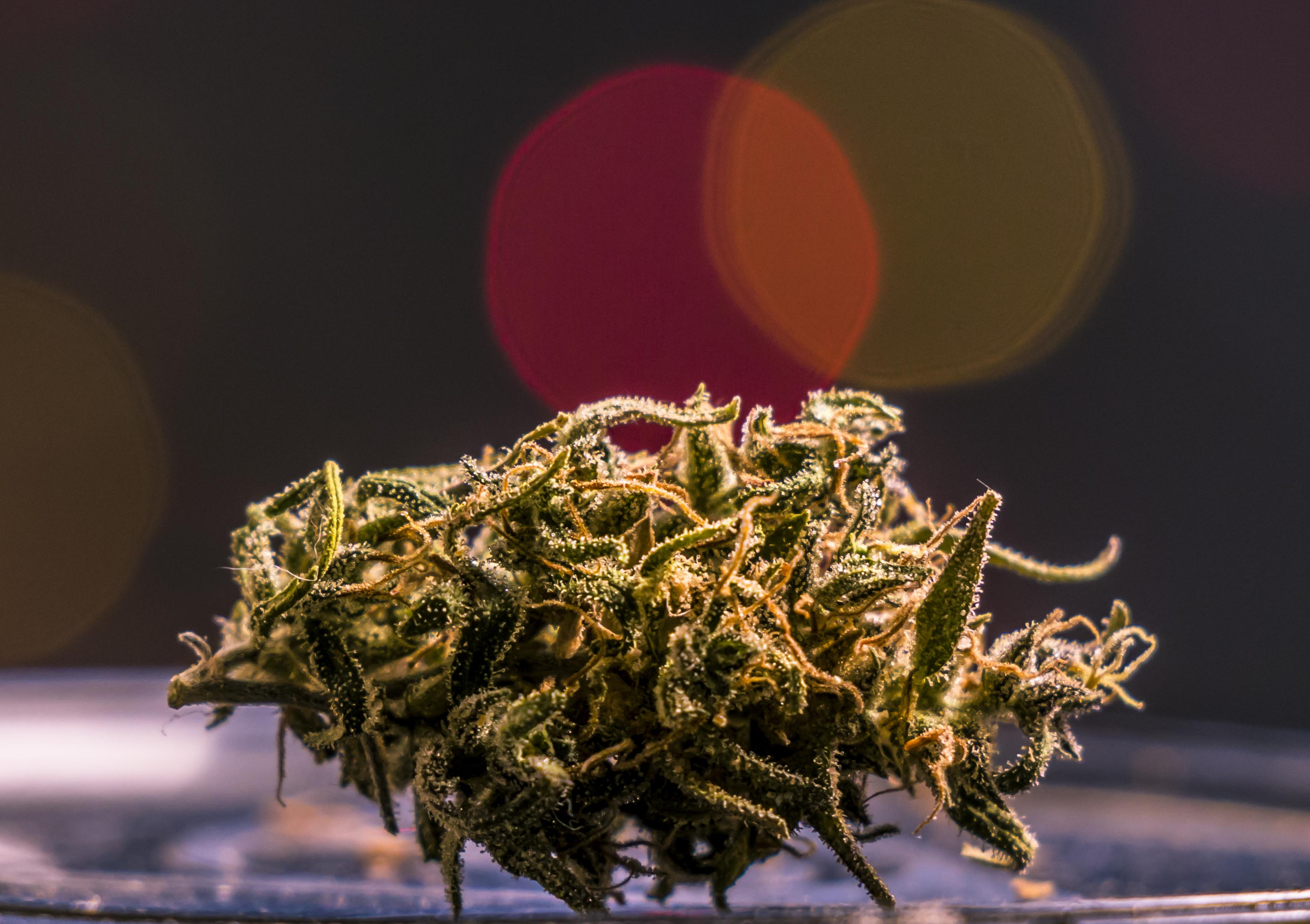 From mellow to high: How the movement to legalise marijuana
